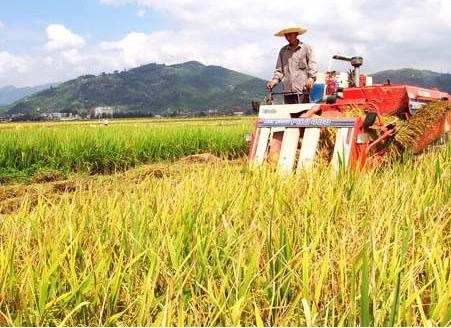 全球食品价格连续第3个月上涨中国市场粮食基本可以保障
